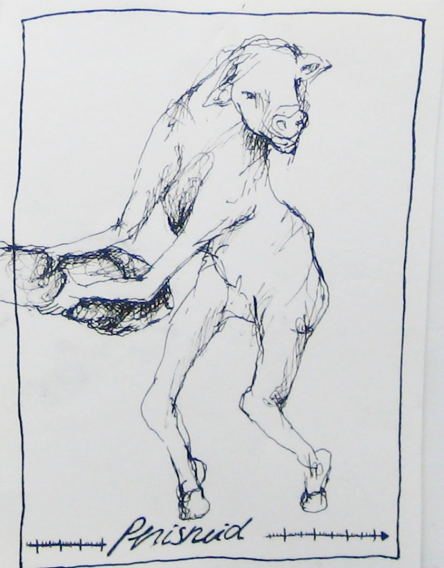 2012-Zeichnung-Sex-46-penisneid-kuh-schwanz-Luisa-Pohlmann-Kunst-Berlin