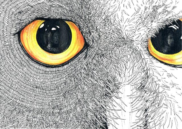 2014-Zeichnung-Kosmos-1-eule-augen-spiegelung-Luisa-Pohlmann-Kunst-Berlin